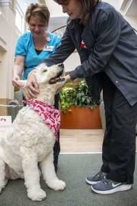 Two nurses in scrubs petting a dog wearing a pink bandana