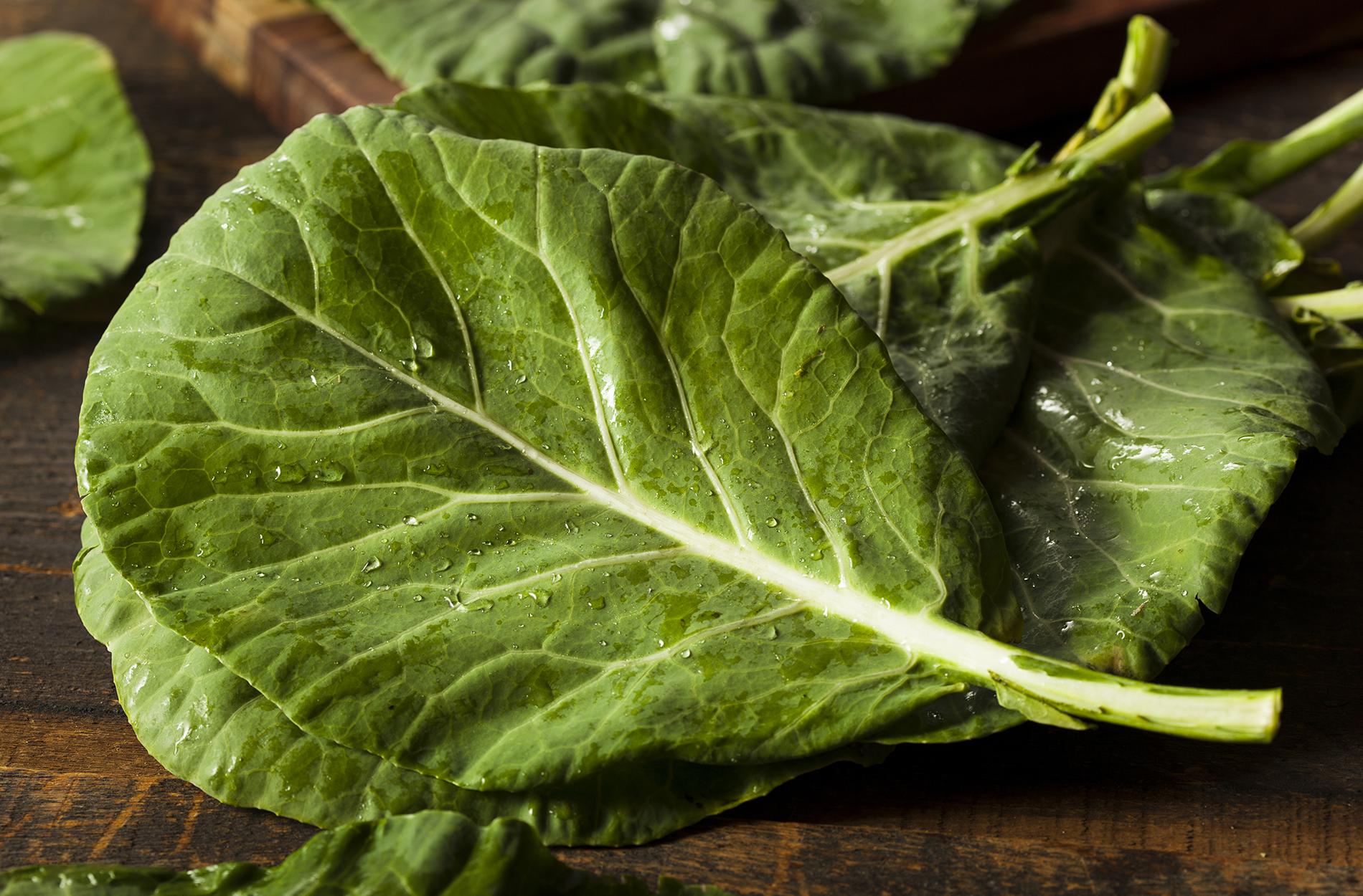 Collard green leaf