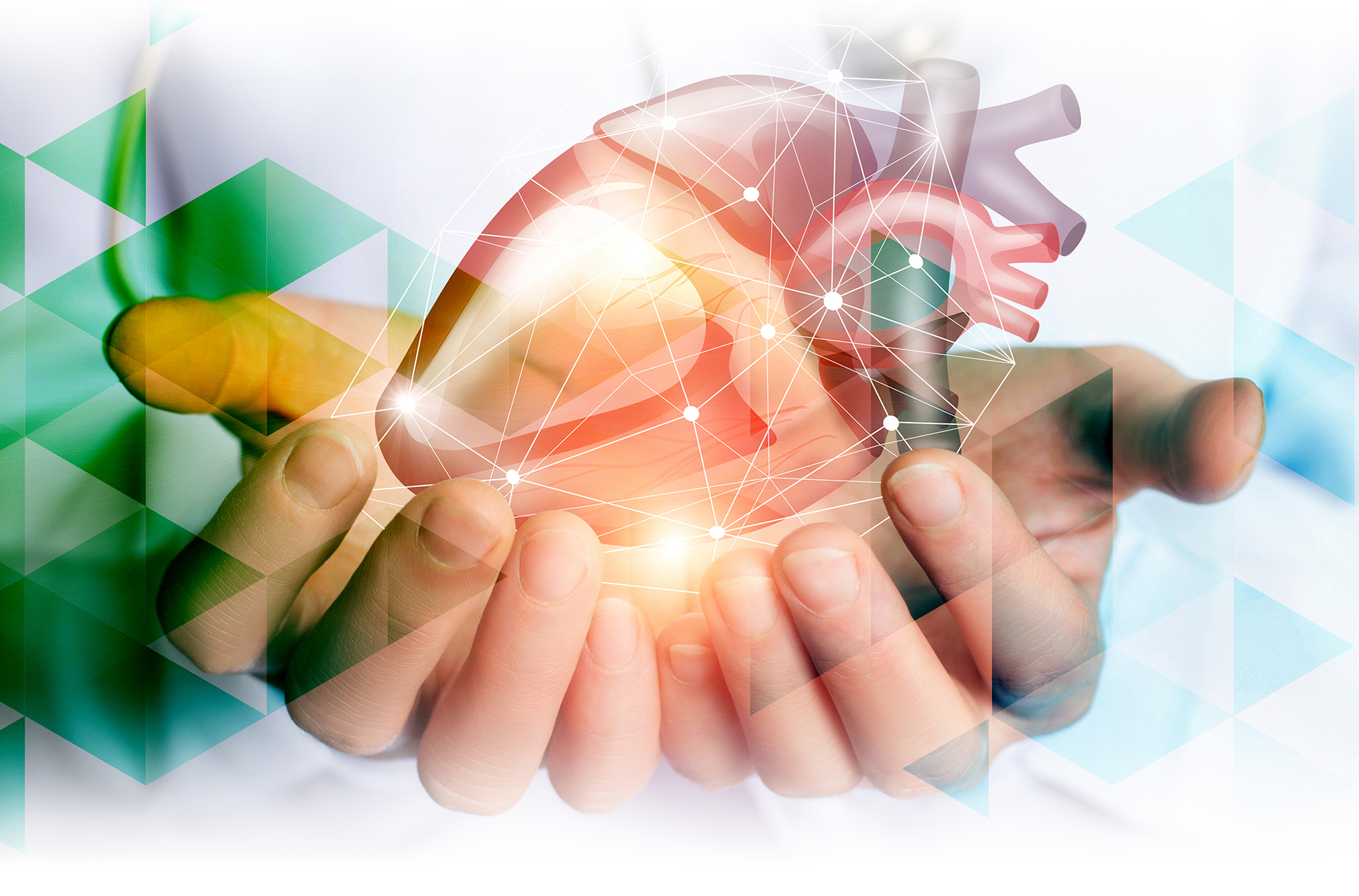 Hands holding abstract model of heart