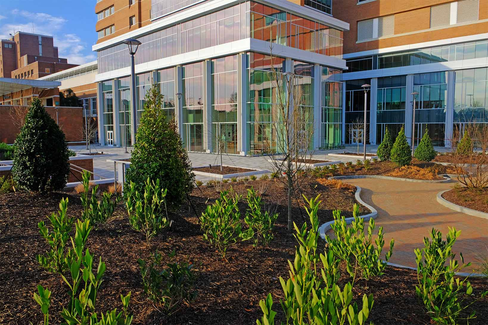 A portrait of manicured plants, small trees, and a path leading up to the doors of the medical center, that is the new tower serenity garden.